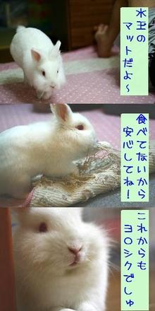 Kyosei_069_2