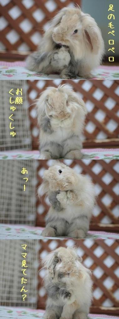 Usagijima_170